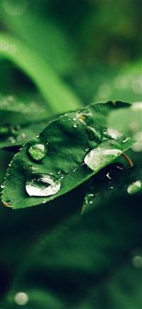 Leaf rain bokeh iPhone X wallpaper