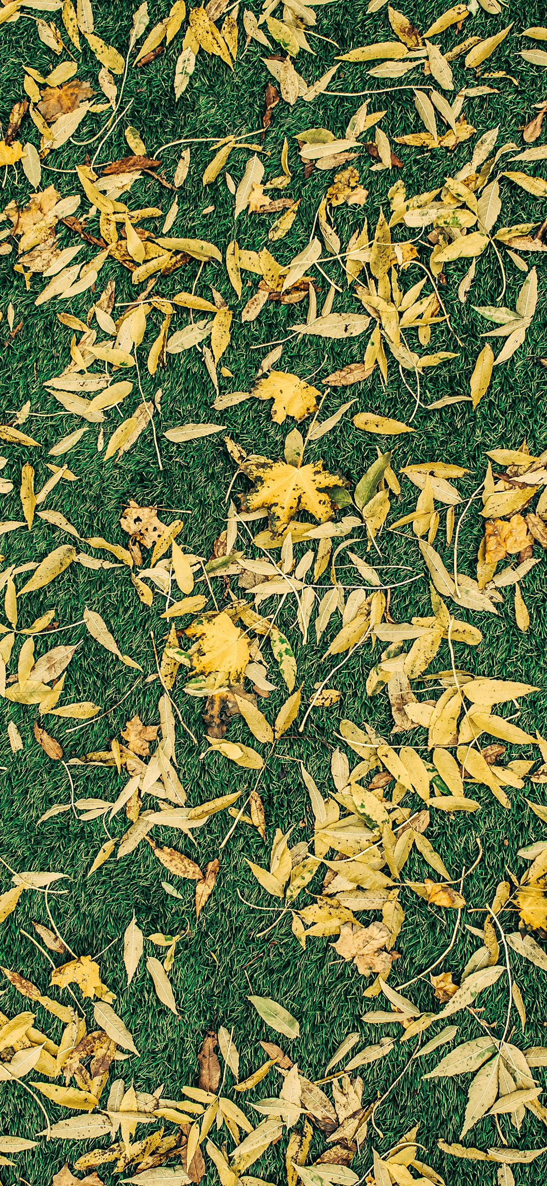Leaf lawn pattern iPhone X wallpaper