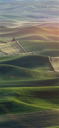 Field nature iPhone X wallpaper