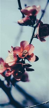 Flower nostalgia iPhone X wallpaper