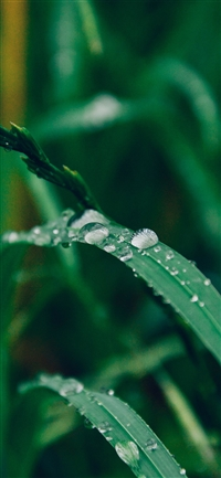 Grass drop water rain iPhone X wallpaper