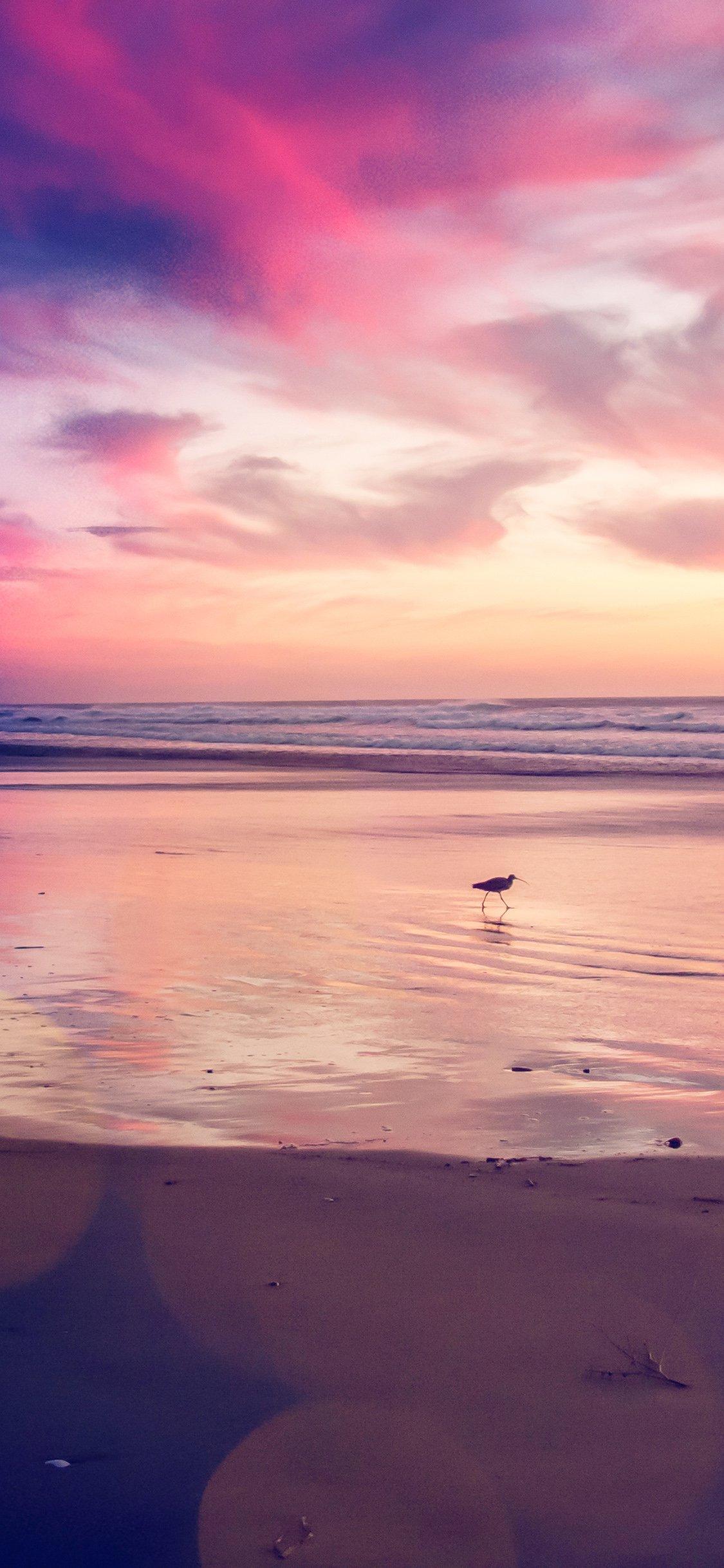 Sunset beach bird iPhone X wallpaper