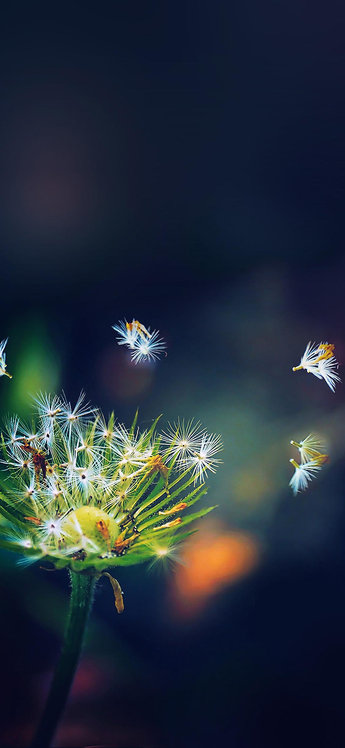 Blowing dandelion flower iPhone X wallpaper