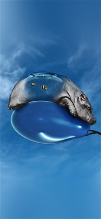 Hippo bored ballon sky iPhone X wallpaper