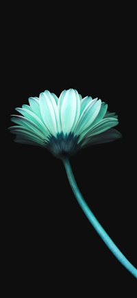 Lonely flower iPhone X wallpaper