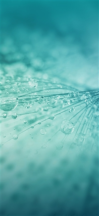 Rain drop flower blue light pattern iPhone X wallpaper