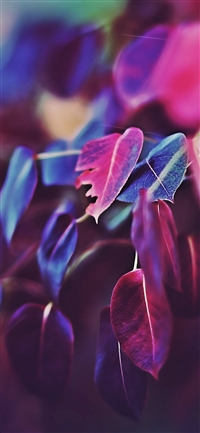 Fall leaf flower bokeh iPhone X wallpaper