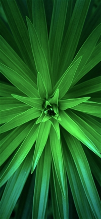 Leaf flower green line iPhone X wallpaper