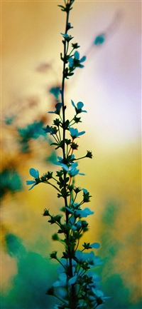 Blue flower sunny bright day bokeh iPhone X wallpaper
