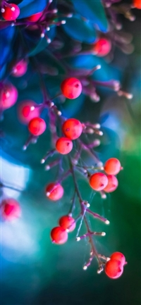 Twig berries leaves background iPhone X wallpaper