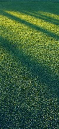 Lawn grass sunlight green blue pattern iPhone wallpaper