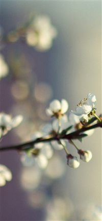 Spring flower bokeh iPhone X wallpaper