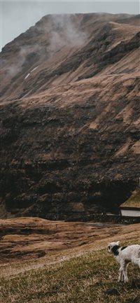 Lamb-at-Saksun--Faroe-Islands iPhone X wallpaper