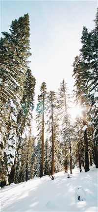 Castle-Peak-wilderness iPhone X wallpaper