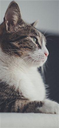 cat iPhone X wallpaper