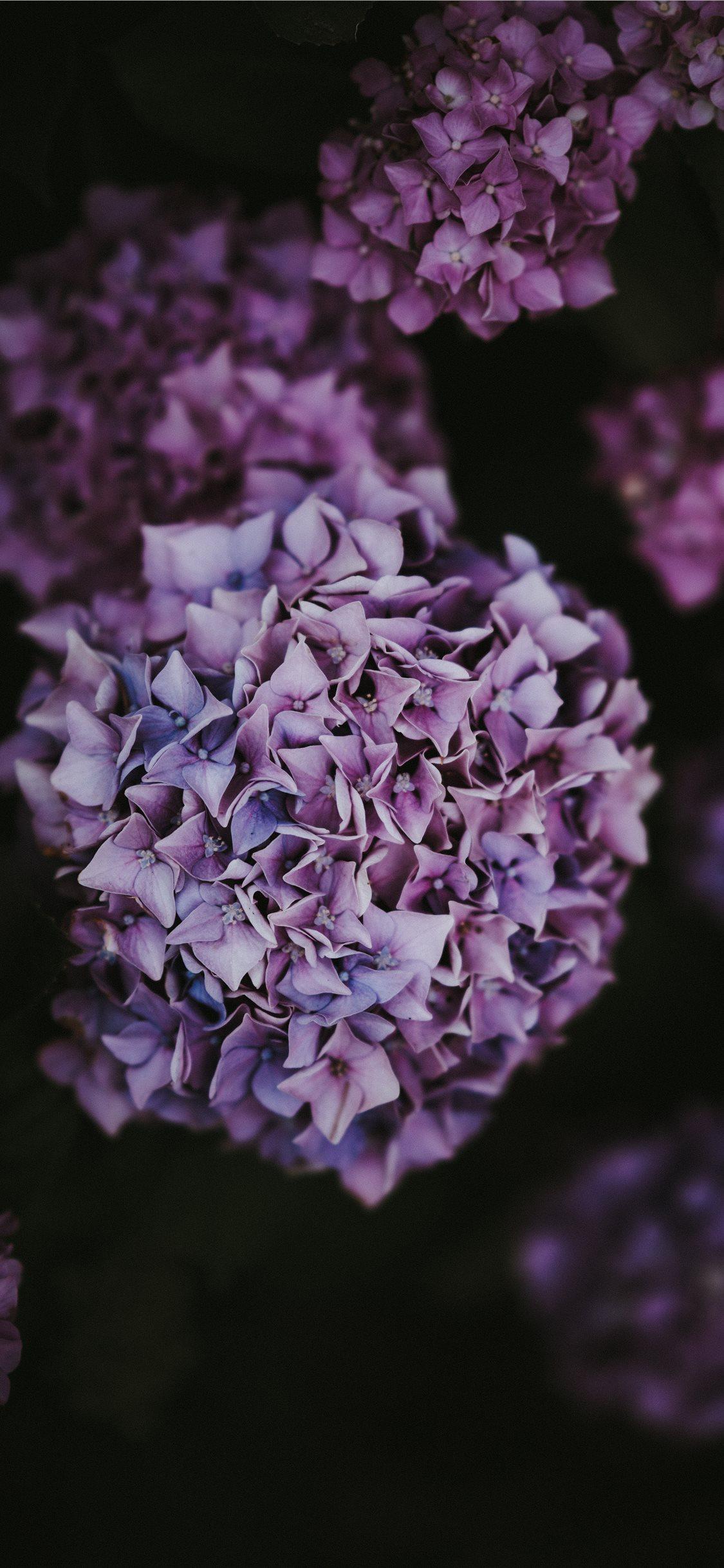 Hydrangea iPhone X wallpaper