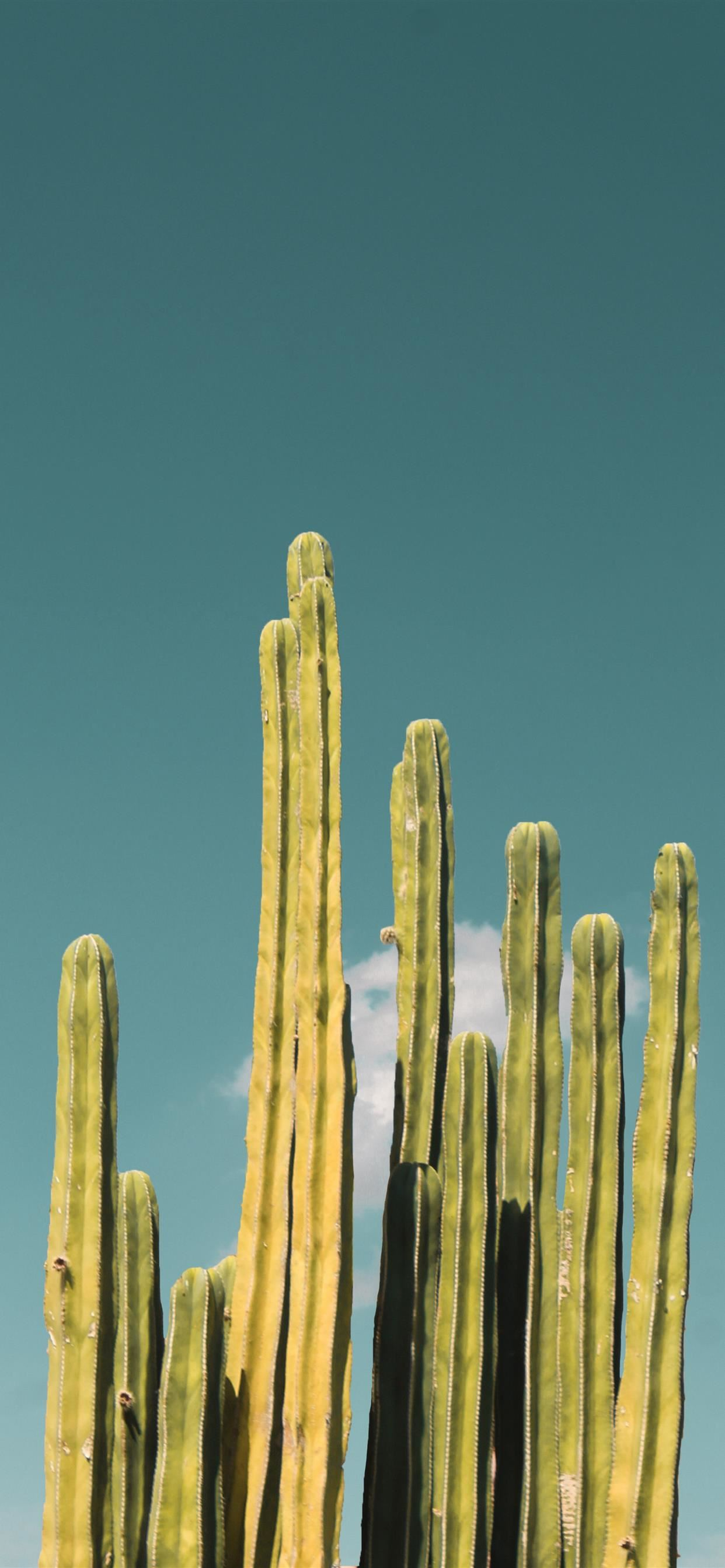 Cactus Iphone X Wallpaper Download Iphone Wallpapers Ipad