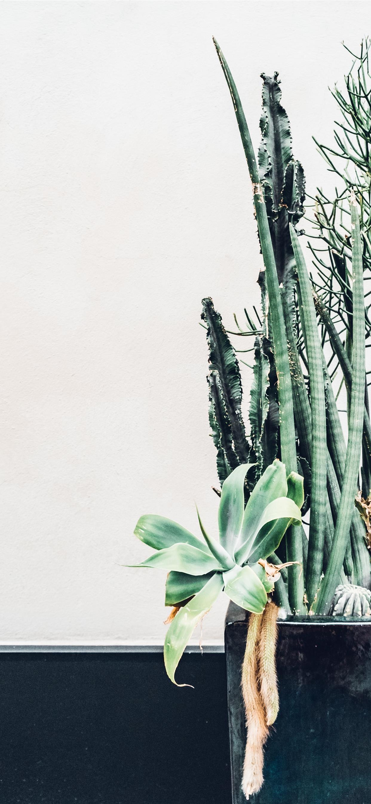 City Cacti Iphone X Wallpaper Download Iphone Wallpapers Ipad