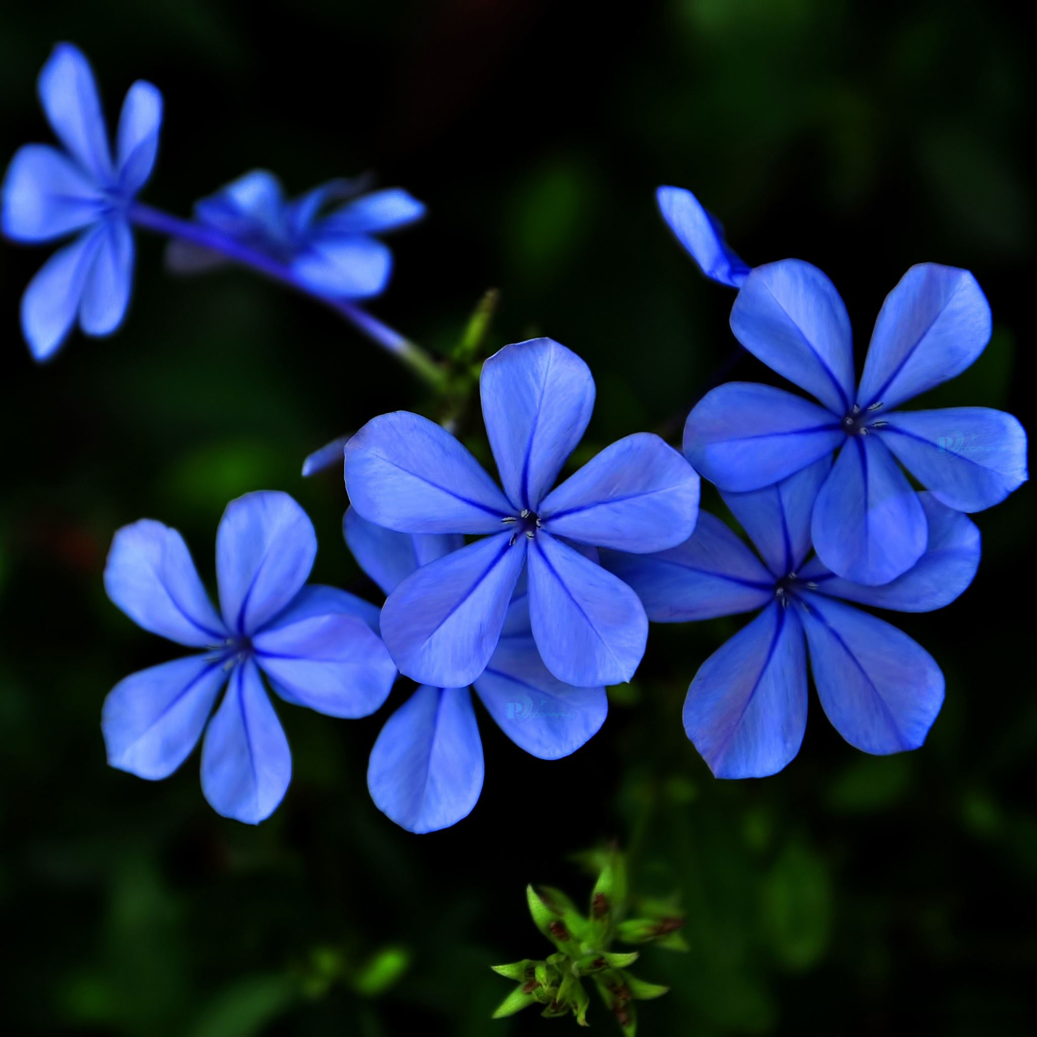 Blue purple flowers ipad air wallpaper download iphone wallpapers blue purple flowers ipad air wallpaper izmirmasajfo