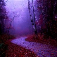 Misty morning walk iPad Air wallpaper