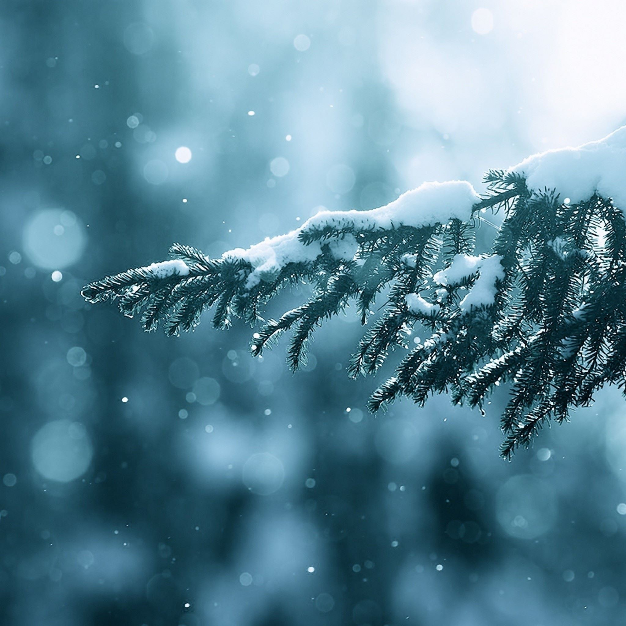 Old Iphone Wallpapers: Winter Season Snow Trees Lens Flare IPad Air Wallpaper