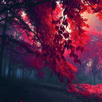 Red Forest iPad Air wallpaper