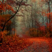 Romantic Autumn iPad Air wallpaper