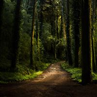 Forest Road iPad Air wallpaper