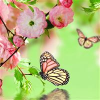 Springtime Joy iPad Air wallpaper
