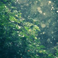 Raining In Summer Sunny Day iPad Air wallpaper