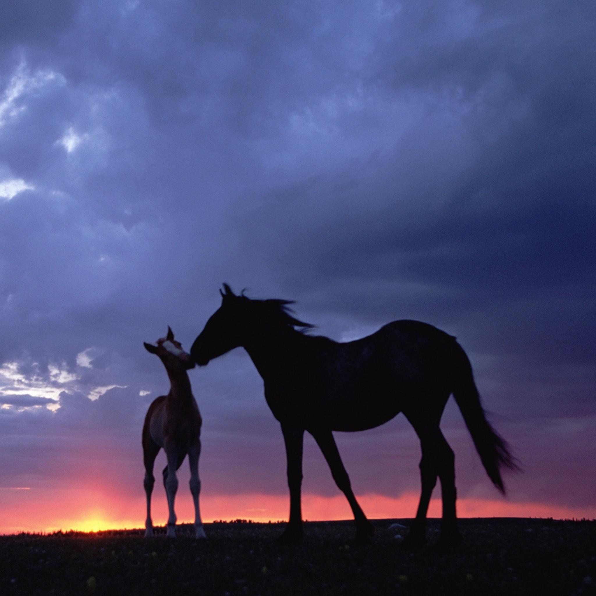 Intimate Horse In Grassland IPad Air Wallpaper