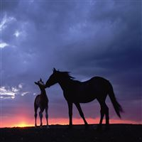 Intimate Horse In Grassland iPad Air wallpaper