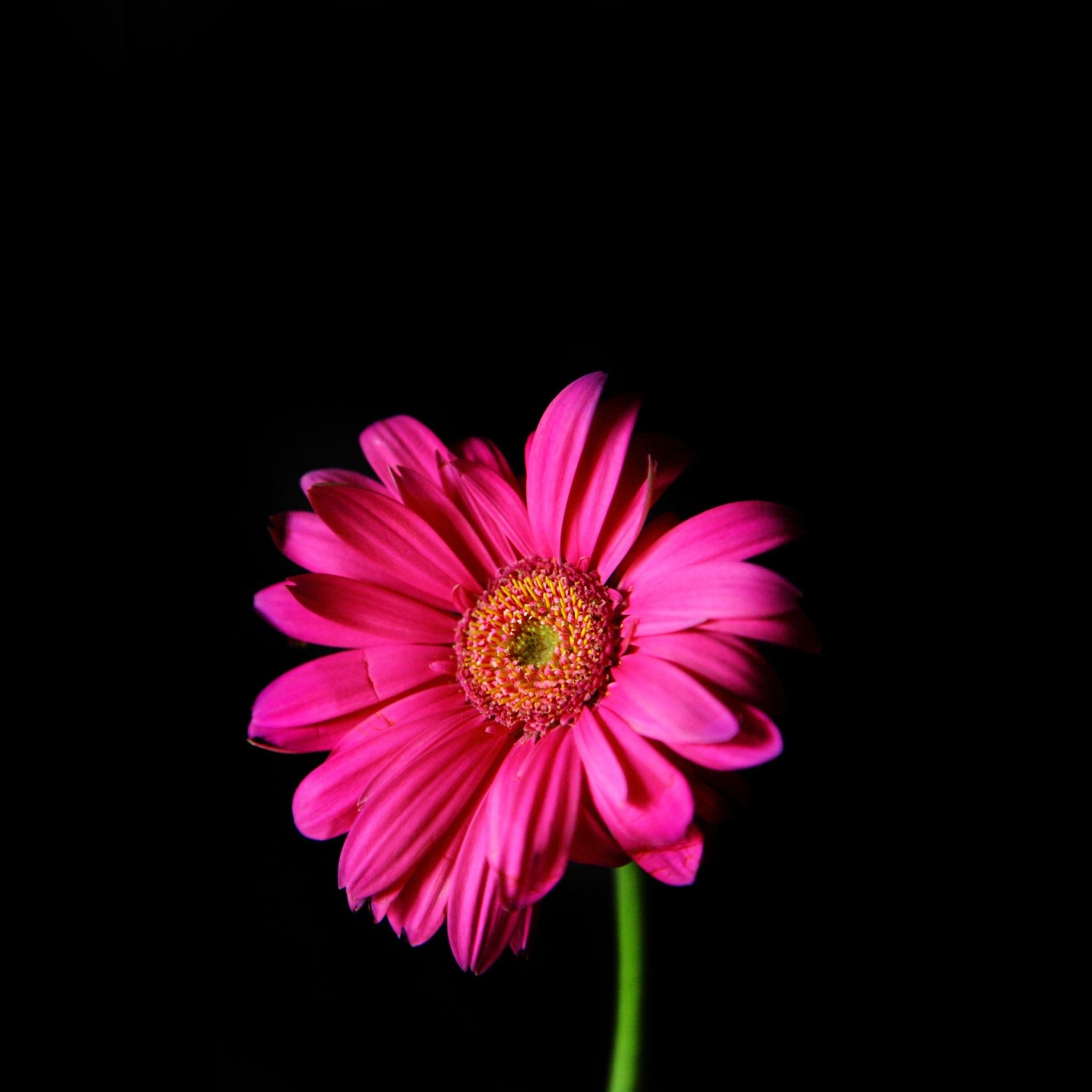 Flower In The Dark Macro IPad Air Wallpaper Download