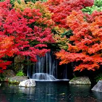 Cool Autumn Waterfall iPad Air wallpaper