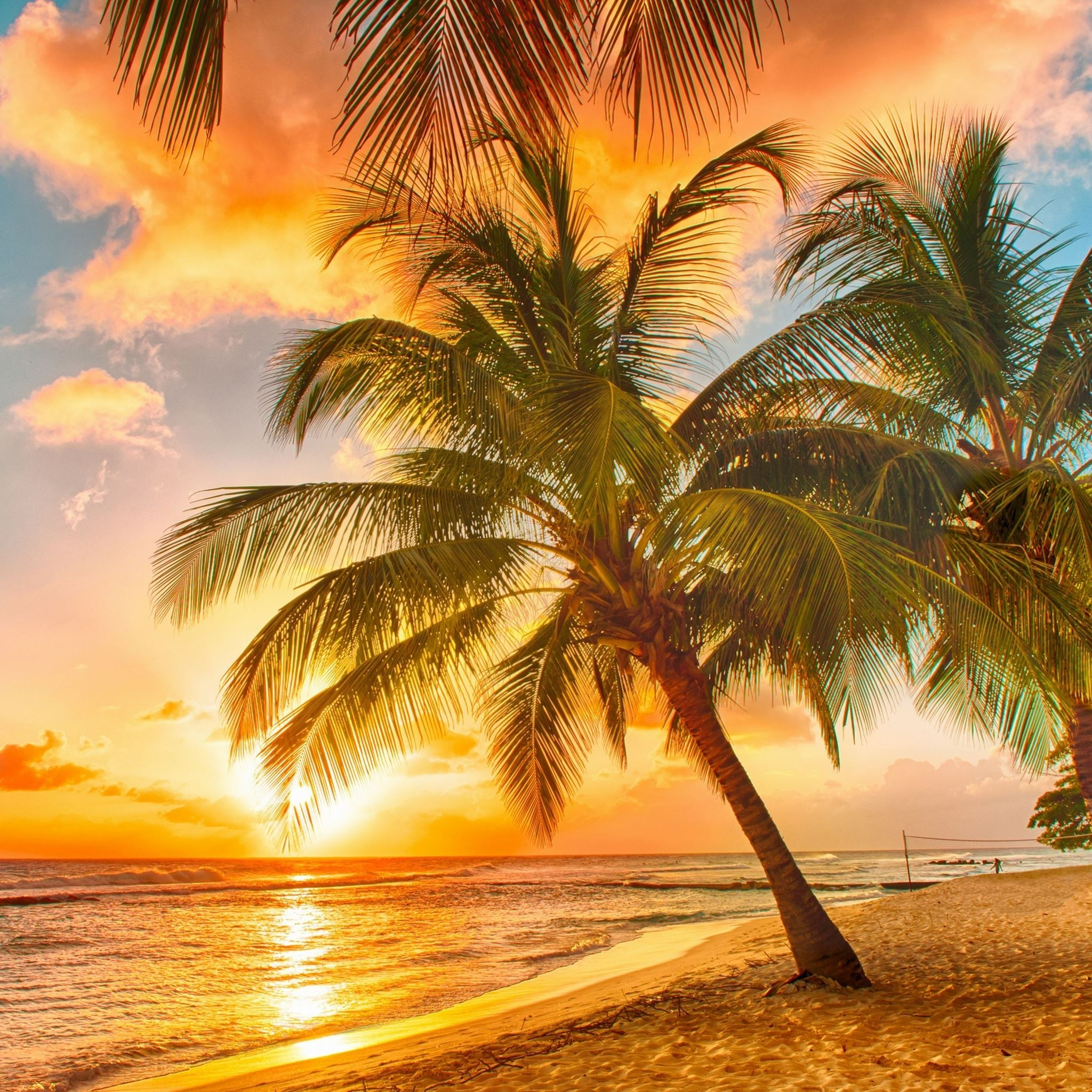 Palm Tree Tropical Beach iPad Air wallpaper