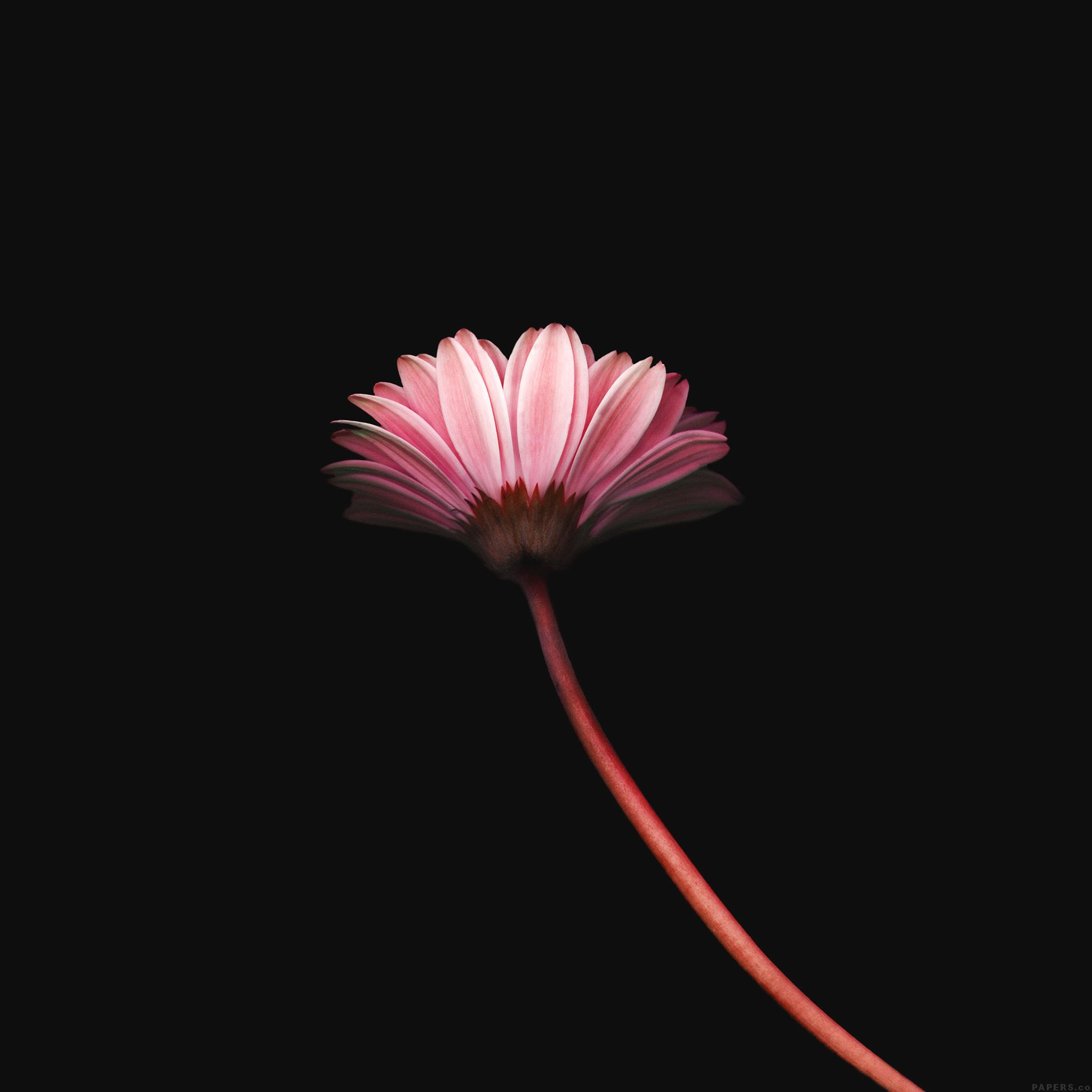 Lonely Flower Dark Red Simple Minimal Nature iPad Air wallpaper