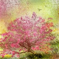 Nature Spring Blossom Trees  iPad Air wallpaper