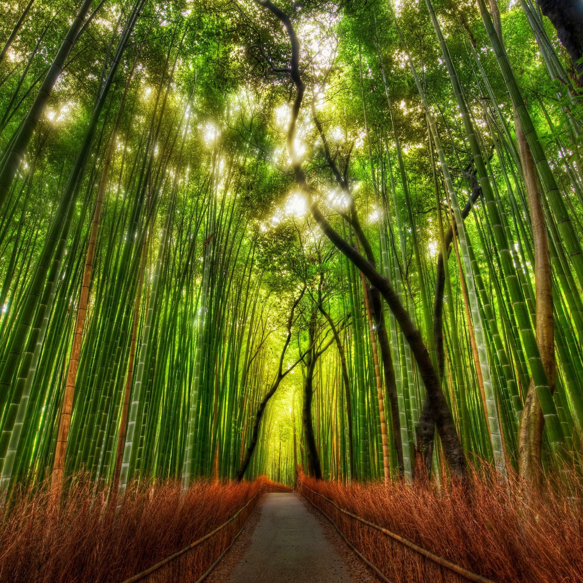 Nature Bamboo Woodland Road iPad Air wallpaper