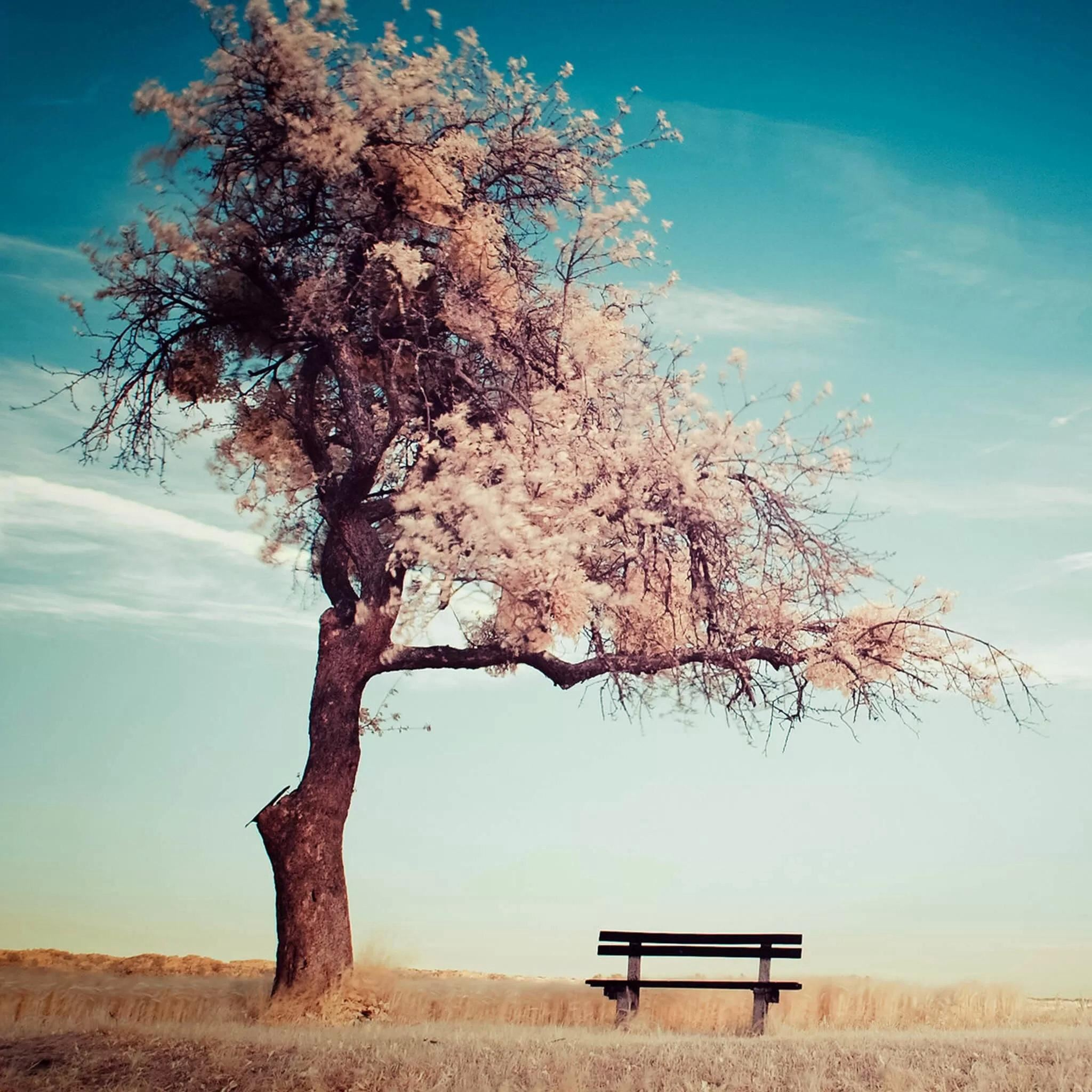 Lonely Beanch Under Blossom Tree iPad Air wallpaper