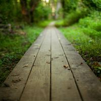 Nature Park Long Wooden Road iPad Air wallpaper