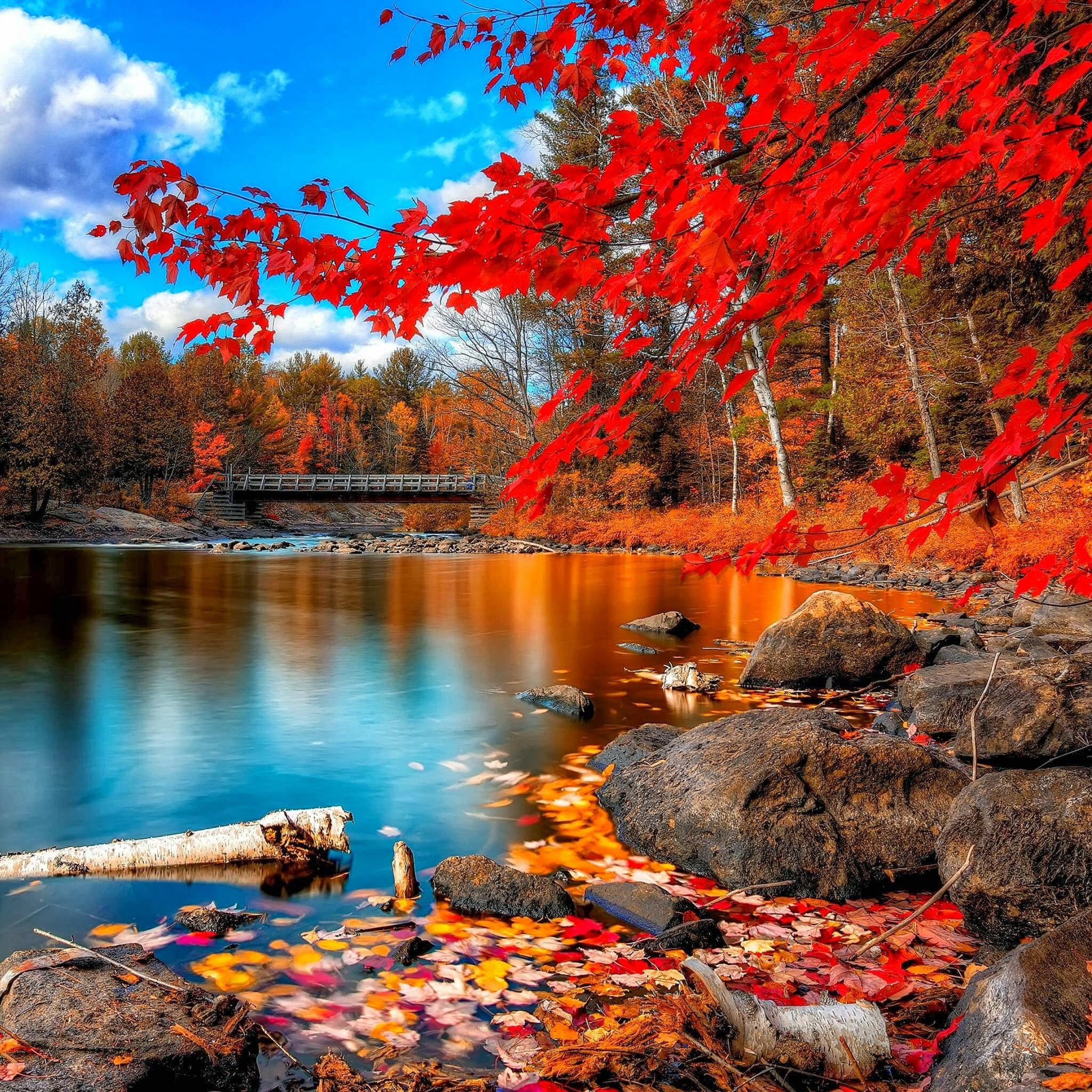 Nature Autumn Red Leaf Calm Lake Landscape iPad Air wallpaper