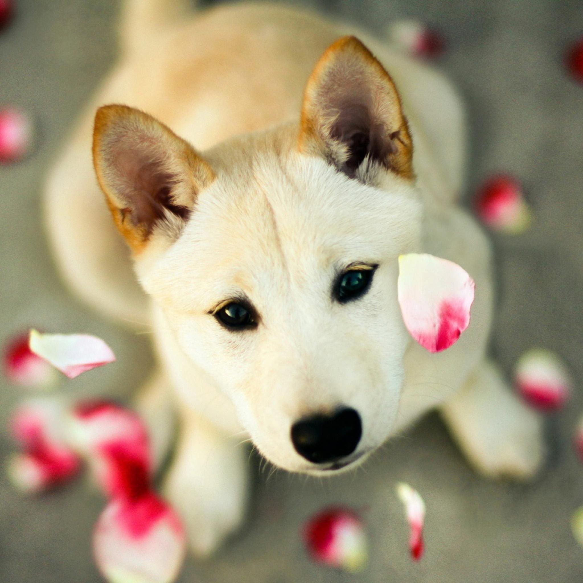Dog Pet Looking Up Pink Petal Ipad Air Wallpapers Free Download