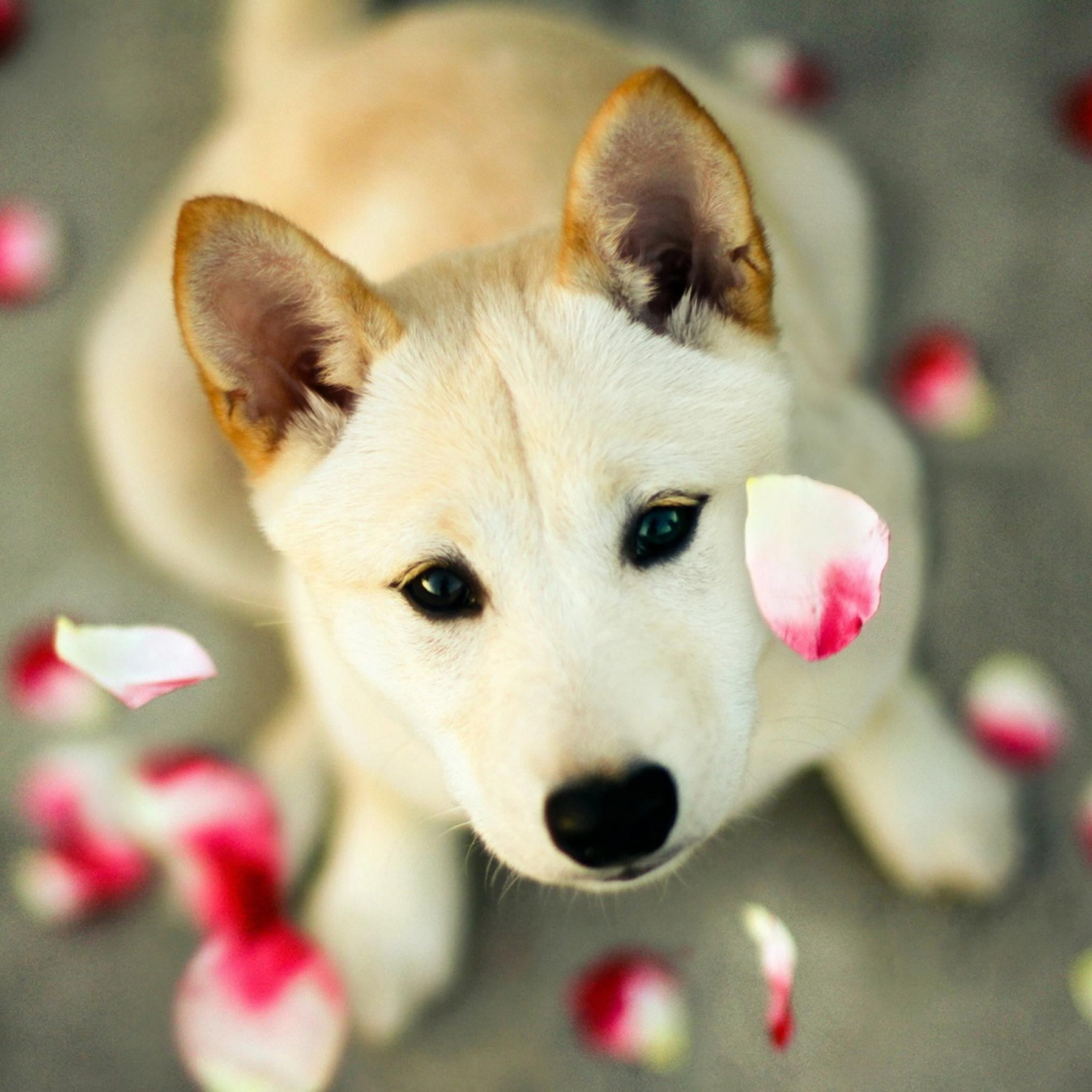 Best Pets Animals Ipad Air Wallpapers Free Hd