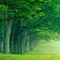 Nature Morning Forest Path iPad Air wallpaper