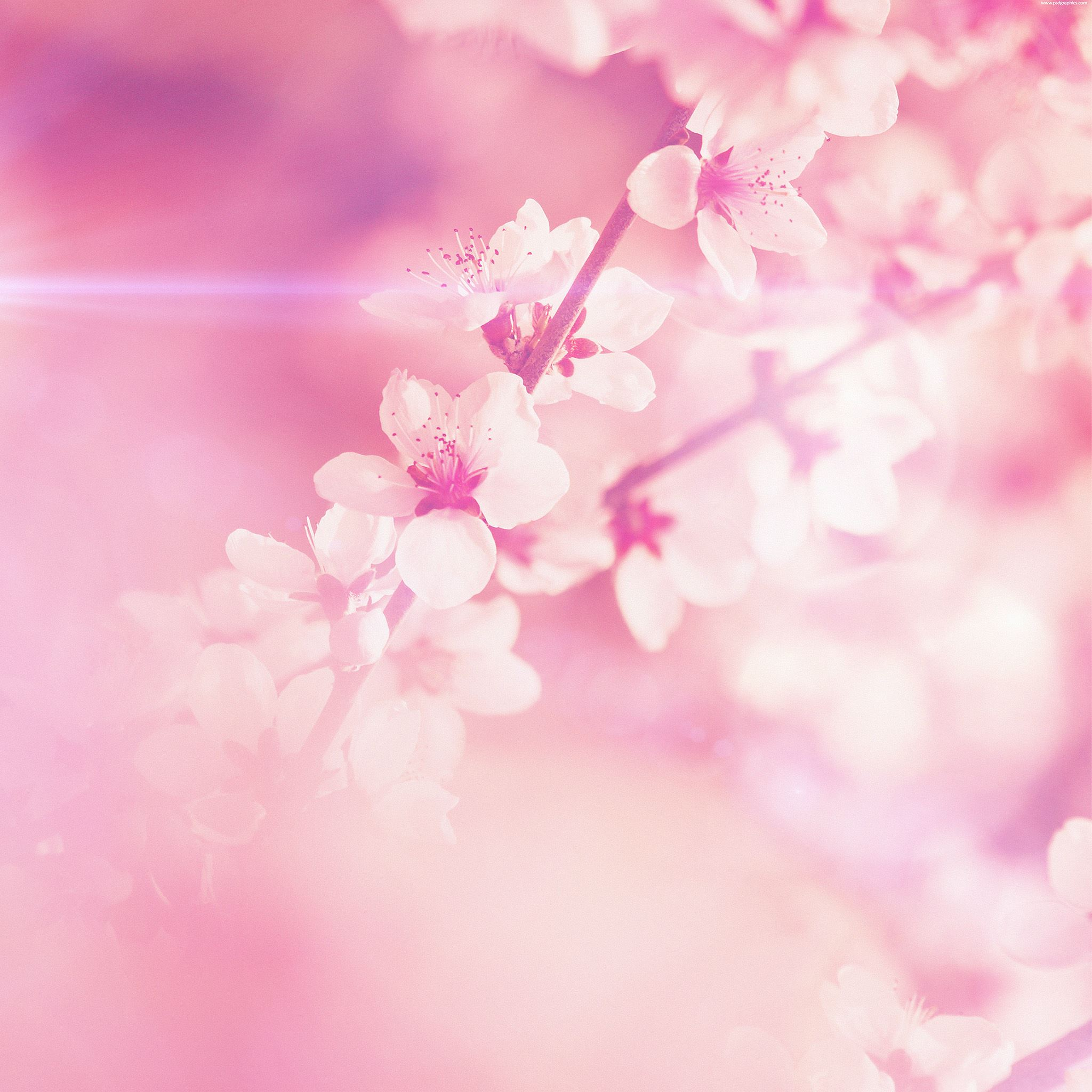Iphone Wallpaper Pink: Spring Pink Cherry Blossom Flare Nature IPad Air Wallpaper