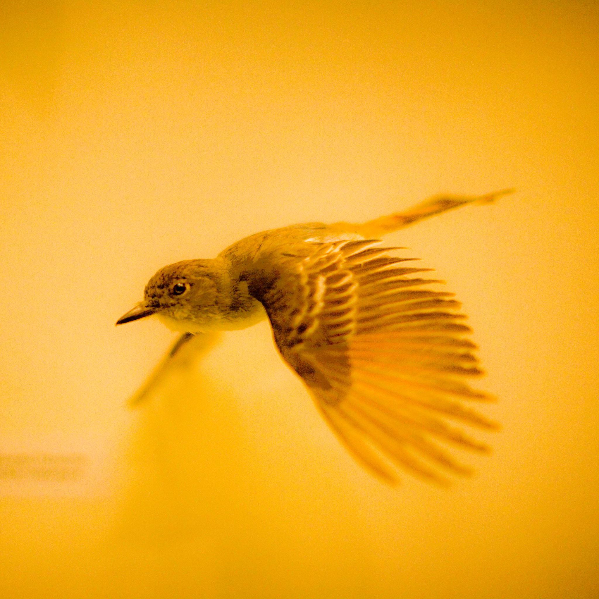 Hawk Bird Over Calm Water IPad Air Wallpaper