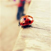 Pure Cute Ladybug Beside Wood iPad Air wallpaper