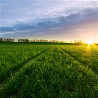 Serenity Corp Field Landscape iPad Air wallpaper