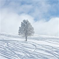 Bright Winter Snowy Tree White Land Field iPad Air wallpaper