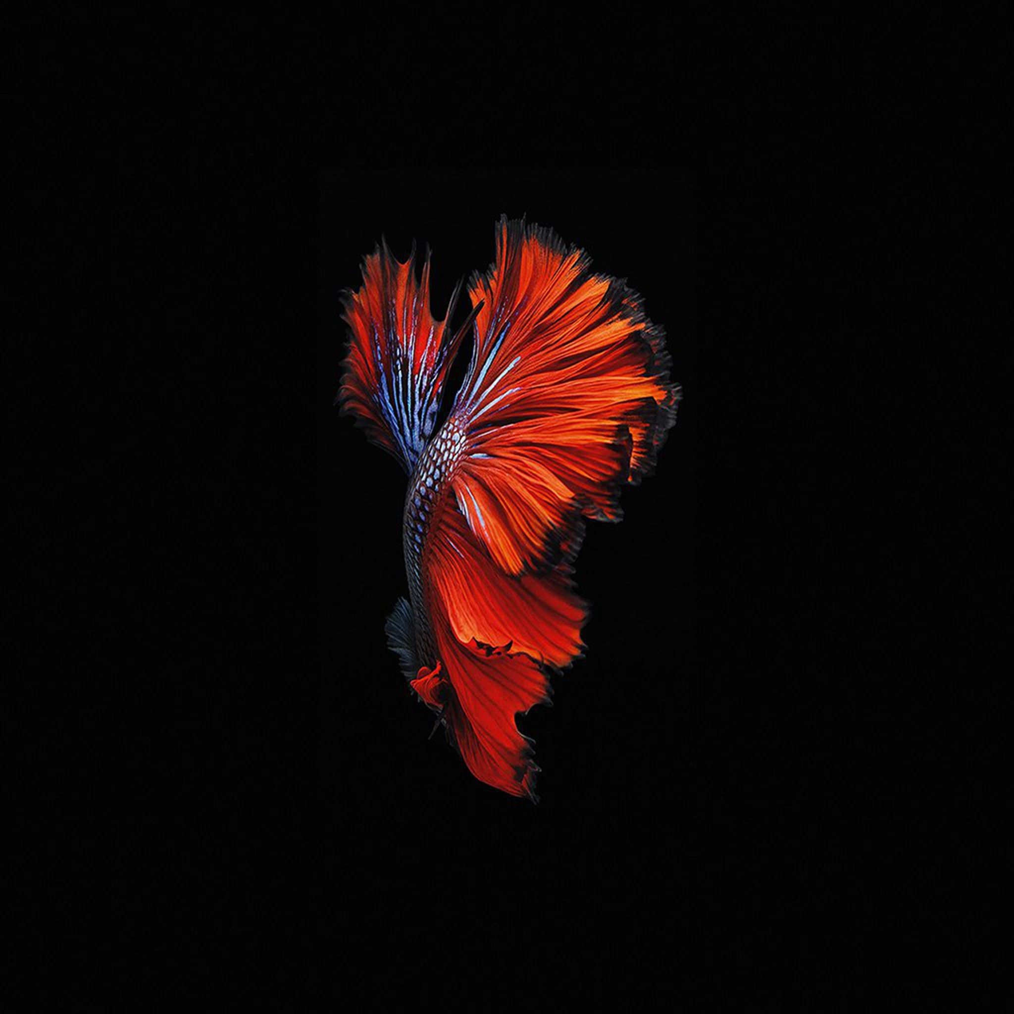 Old Iphone Wallpapers: Apple Ios9 Fish Live Background Dark Red IPad Air